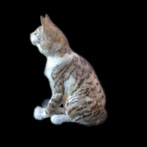 Ben Bobcat
